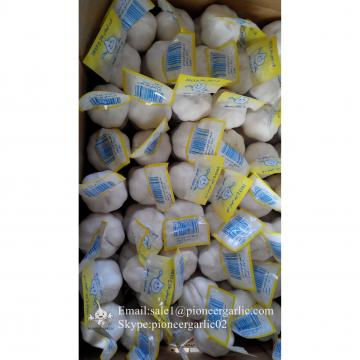 Chinese Fresh Jinxiang Snow White 4.5cm Garlic Small Packing In 10kg Box