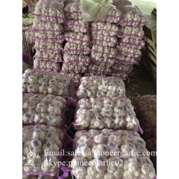 New Crop 5.5cm Pure White Chinese Fresh Garlic Small Packing In Mesh Bag