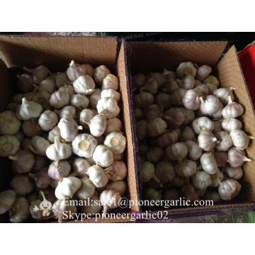 100% Natural Garlic Fresh Jinxiang Garlic Normal White Purple Garlic Exported to African Market