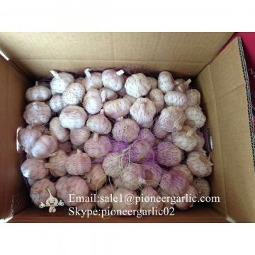 2017 New Crop Best Quality Chinese Red Garlic In Various Sizes