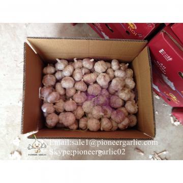 Chinese Fresh Red Garlic (Allium Sativum) Packed In Mesh Bag