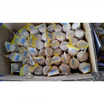 New Crop Chinese 5.5cm Snow White Fresh Garlic Small Packing In Mesh Bag