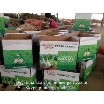 New Crop Natural Fresh Jinxiang Shandong Normal White Garlic