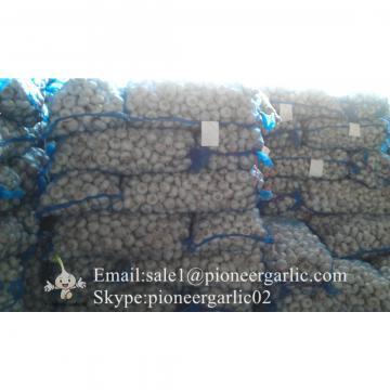 Chinese Natural 5.5cm Red Garlic Loose Packing In 20kg Mesh Bag