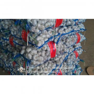 5-5.5cm Fresh Normal White Garlic In Mesh Bag Packing
