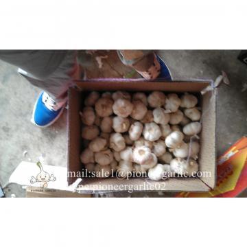Normal White Garlic Loose Packing in Mesh Bag or Carton Box produced in Jinxiang