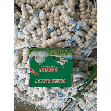 Chinese Natural Garlic Purple Garlic Exported to Costa Rica