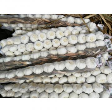 New Crop Chinese 5cm Snow White Fresh Garlic Small Packing In Box