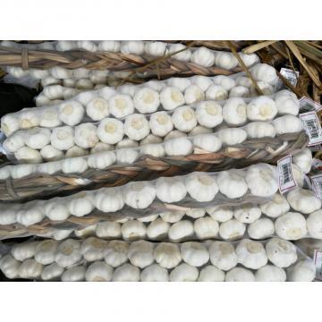 Pure White 5.0cm 100% Nature Made Garlic Sell to Latin America
