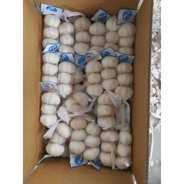 5.0cm 100% Pure White Snow White Chinese Fresh Garlic Exported to Guatemala