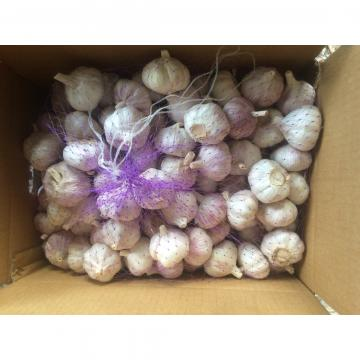 Chinese Red Garlic Exported to Chile Normal White Fresh Garlic