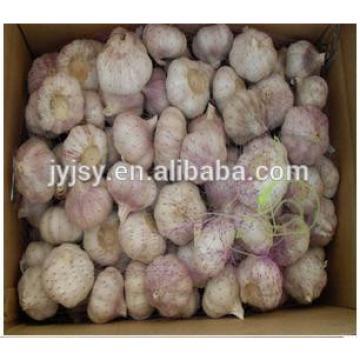 fresh garlic 2017