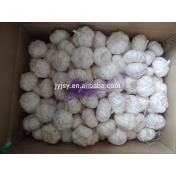 Fresh garlic from china