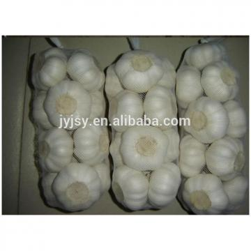 fresh garlic of 2017 year from china shandong