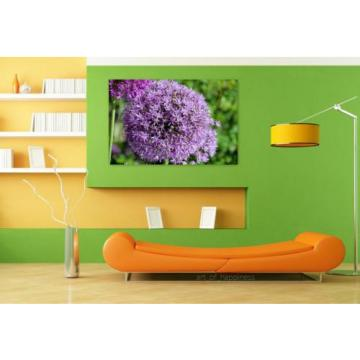 Stunning Poster Wall Art Decor Garlic Sphere Violet Plant Flower 36x24 Inches
