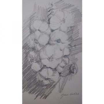 Garlic, original still life drawing by Jan Hicks