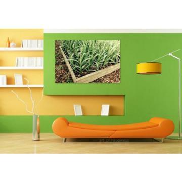 Stunning Poster Wall Art Decor Garlic Garden Gardening Plant Box 36x24 Inches