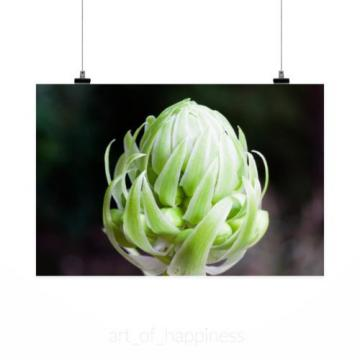 Stunning Poster Wall Art Decor Garlic Blossom Bloom Plant Allium 36x24 Inches