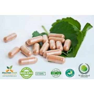 Garlic Odourless Pure Herb Capsules 100 X 1000mg