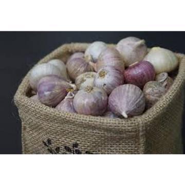 Single Clove garlic 30 Bulbs, Single Bulb form of Elephant Garlic herbs thai.