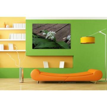 Stunning Poster Wall Art Decor Bear S Garlic Inflorescence Blossom 36x24 Inches