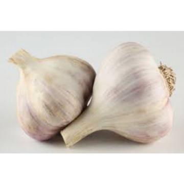 Seeds Giant Garlic Lyubasha Winter For Garden Organic Russian Ukraine