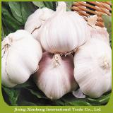 New fresh garlic red Manufacturers