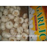New crop garlic