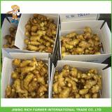 Wholesale Export Naturally Dried Fresh Ginger 200g From