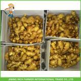 150g Fresh Ginger From Organic Ginger Supplier