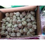 Chinese Fresh Red (Allium Sativum) Garlic Packed in 10kg Mesh Bag