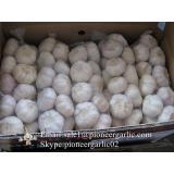 Best seller Purple Garlic 5.0cm-5.5cm Packed in Mesh Bag or Carton Box