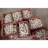 Garlic Wholesaler Hot Sale Chinese Normal Garlic 5.5cm and Up