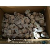 Small Packing 5-5.5cm Fresh Red Garlic Produced In Jinxiang Shandong China