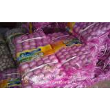 100% Natural Garlic Fresh Jinxiang Garlic Normal White Purple Garlic Exported to African Market