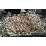 Nature Made 4.5-5.0cm Normal White Garlic Material of Black Garlic in Mesh Bag
