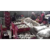 New Crop Natural Fresh Jinxiang Shandong White Garlic