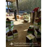 5-5.5cm Chinese Fresh Normal White Garlic In 5kg Carton Box Packing
