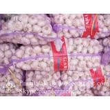 Jinxiang Fresh 5.0-5.5cm Chinese Red Garlic Packed in Mesh Bag for Garlic Wholesale Buyers Around the World