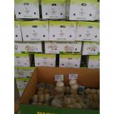 Chinese 100% Pure White Garlic Exported to Costa Rica Guatemala