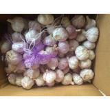 5.0cm Purple Garlic Packed in Carton Box