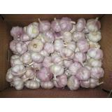 Hot Sale Chinese Red Fresh Garlic with Nice Price