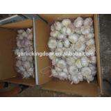 White garlic /White garlic from shandong/White garlic for sale