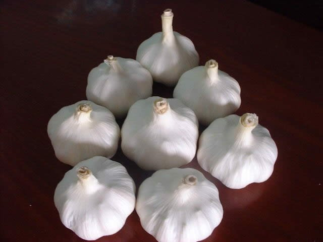 Cheap Garlic For Middle-east Market