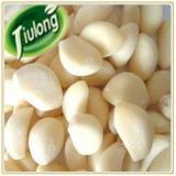 Fresh natural solo garlic
